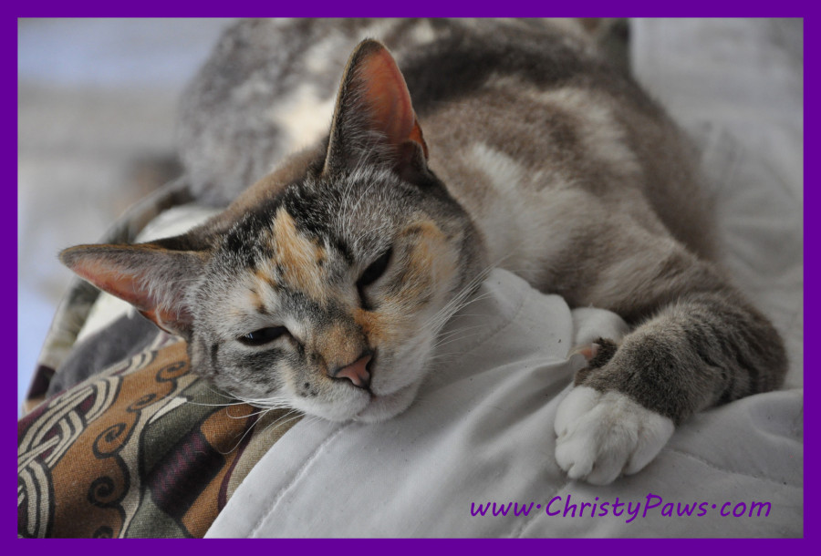 Cats with Blogs Can Make a Difference