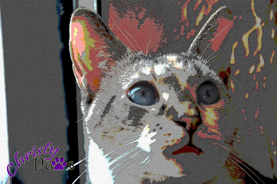 Caturday Art: Mostly Gray