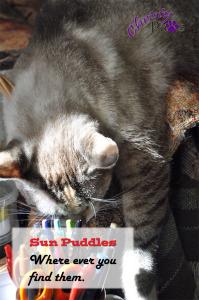Sun puddles 4