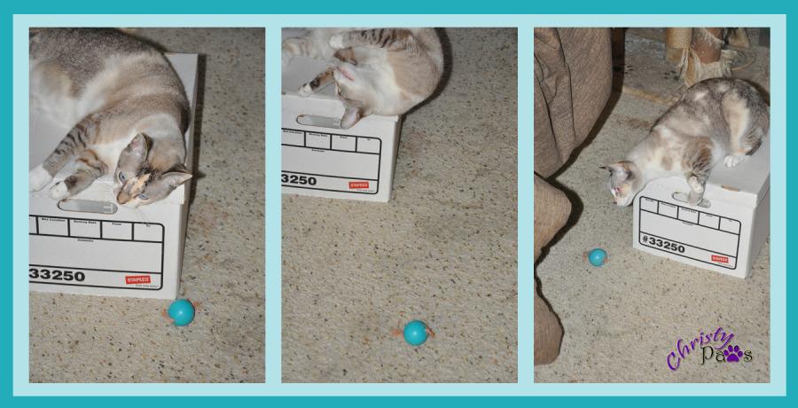 Unexpected treasure in the cat room