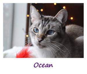 Ocean Sidebar