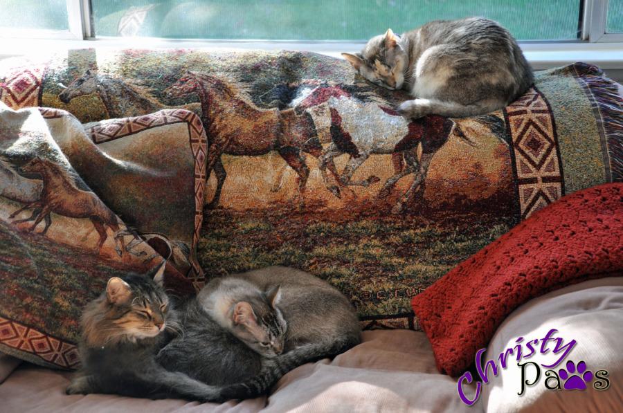 3 sleeping on sofa