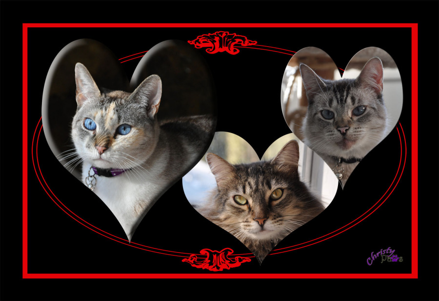 Caturday Art: Valentine Fail