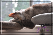 Two level sleeping - BlogPaws Nose-to-Nose Awards finalist