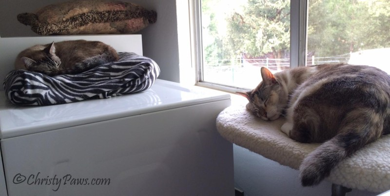 I've Been MIA - Ocean and Christy enjoying two of many beds