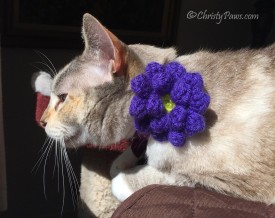 About Last Week - Christy with crocheted flower