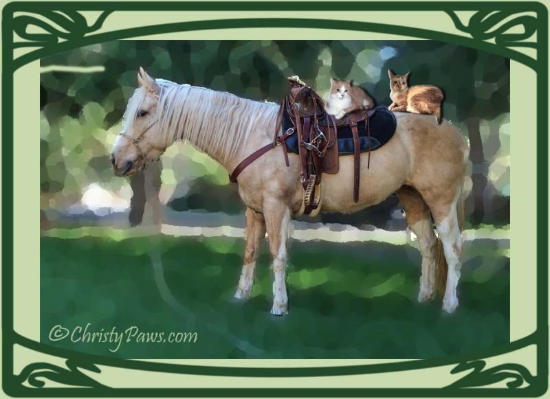 Pony Ride 005 copy
