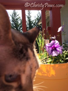 Sunday Selfies: On the Deck - Christy Paws