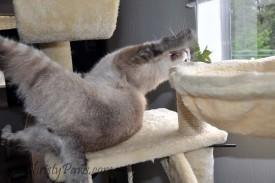 Ocean Celebrates his Birthday with Fresh Catnip