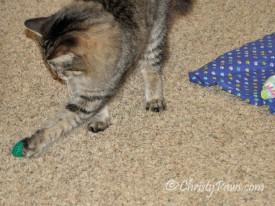 Echo batting a toy around