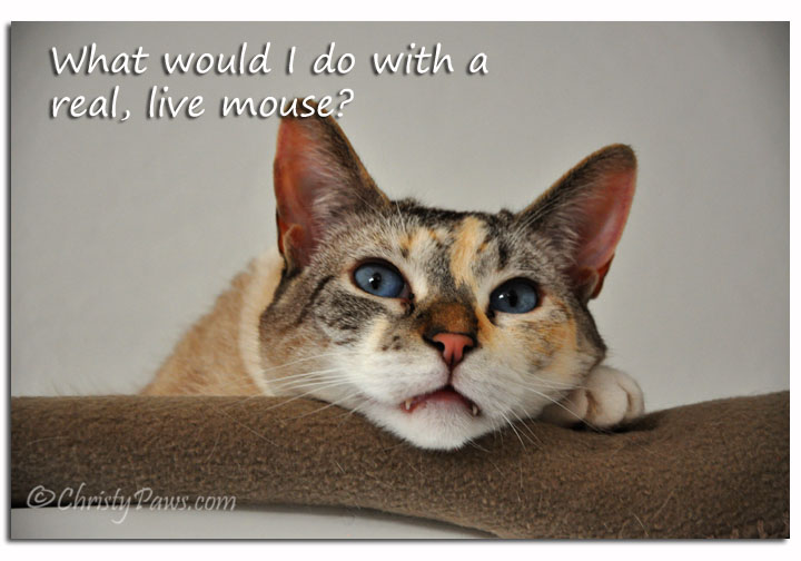 What would I do with a real, live mouse?