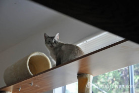 Ocean on the modified top shelf of the big cat tree