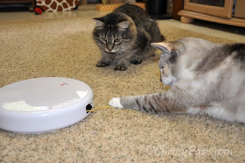 What IS that thing? - We won a FroliCat Flik - Christy Paws