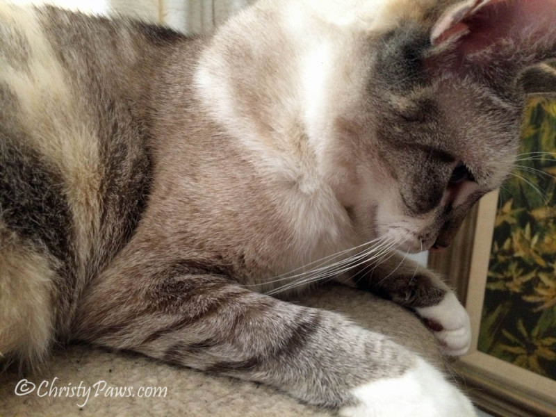 My Thoughts on Selfies Today - Christy Paws