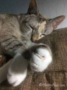 Caturday Art: More than Sleepy - Christy Paws