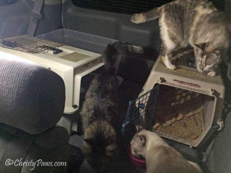 Where do Evacuated Kitties Stay During a Fire? - Our first night in the car