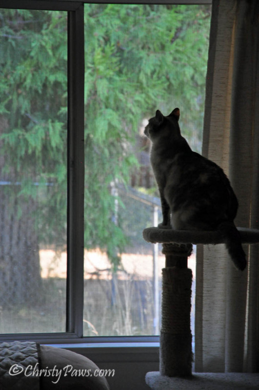Wordless Wednesday: Cooler Weather Means Open Windows with lots of whiffing and birdTV! www.christypaws.com
