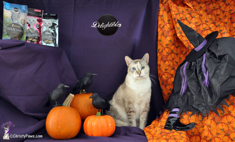 Christy and her Delightibles Halloween photo shoot set