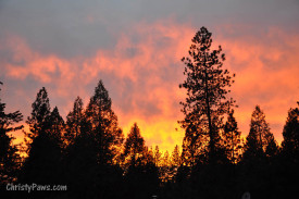 Spectacular Sunset and pine trees
