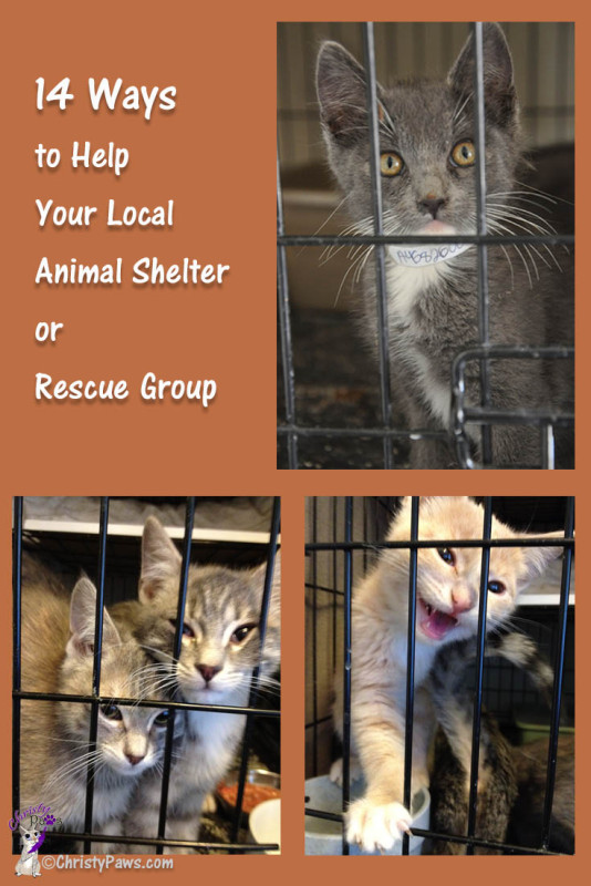14 Ways to Help Your Local Shelter or Rescue Group