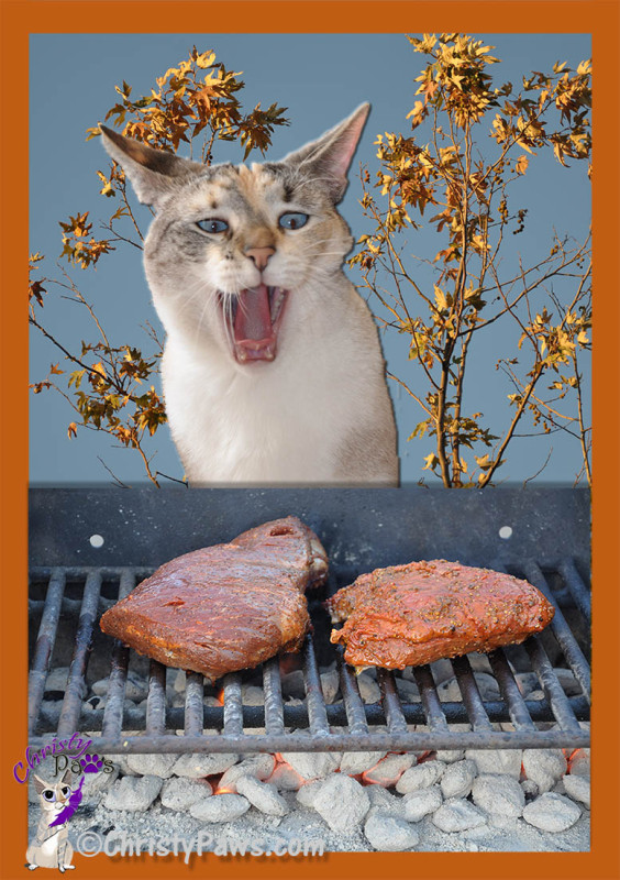 Hungry kitty gretting ready to chow down on a couple of tri-tip roasts on the barbecue
