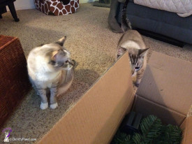 Christy and Ocean inspecting box