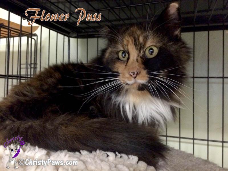 Adopt Flower Puss -- A-Pal Humane Society