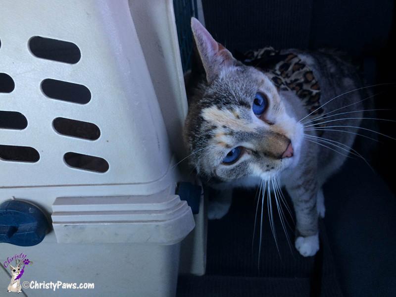 Car ride rubbing crate