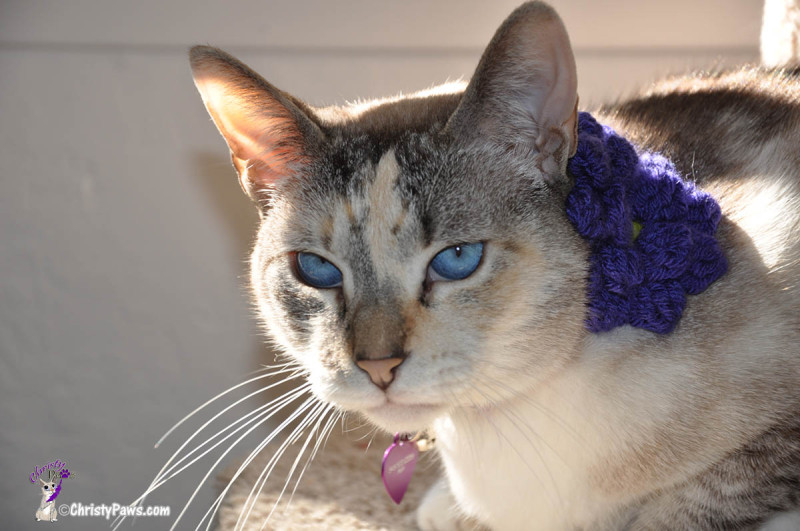 Original photo of Christy used for digital Caturday art project
