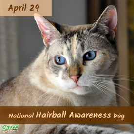National Hairball Awareness Day