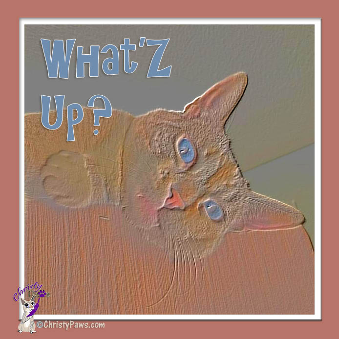 WhatZ Up - artified photo from My July Instagram Favorites