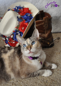 American Dream photo contest entry - Blogoversary and Comment-a-thon for A-Pal Humane Society
