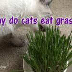 Let 'em Eat Grass