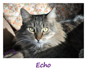 Echo for sidebar