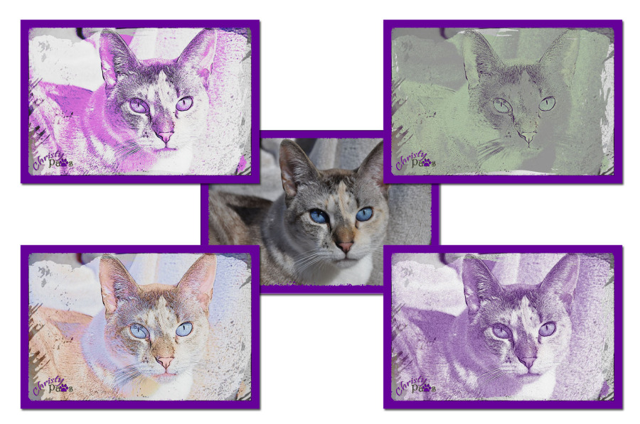 Caturday Art: Pretty in Purple