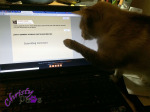 Blogging Kitty's Morning Routine