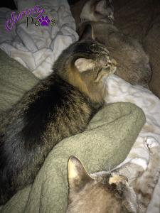 Three cat night