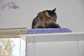 Catification -- One Shelf at a Time