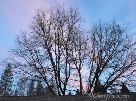 Tree 141_0427_834