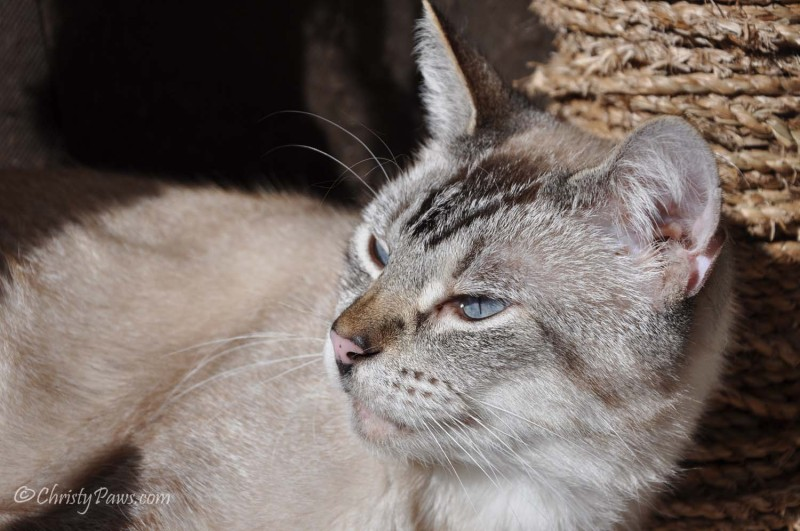 101314_9 Ocean's Story - Another Lucky Rescue