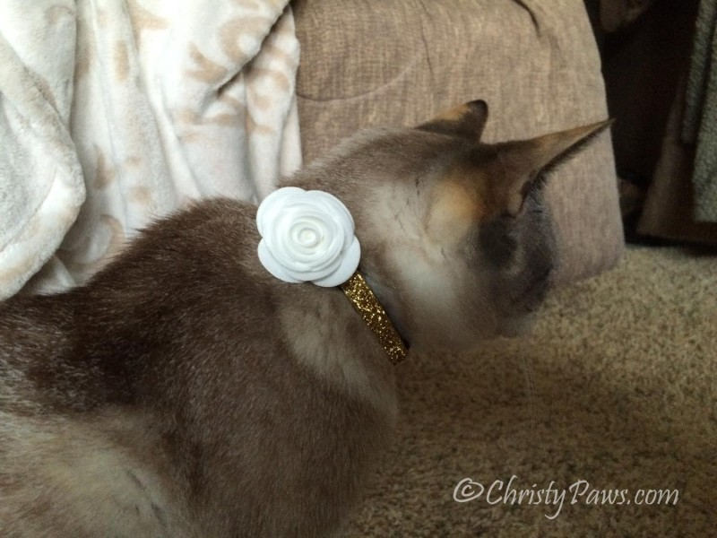 My Lola collar and white corsage
