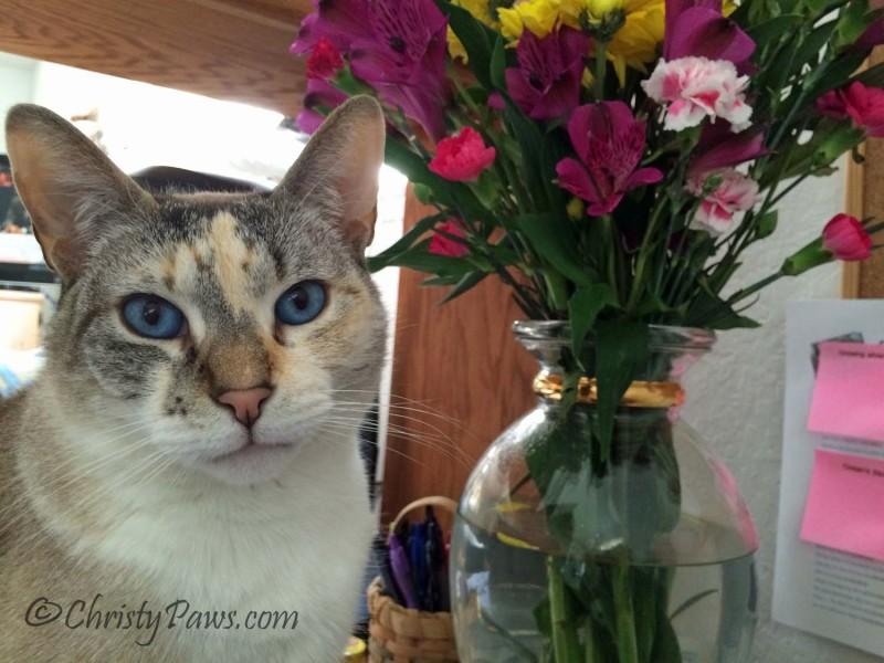 Spring Flowers 4-6-15 038