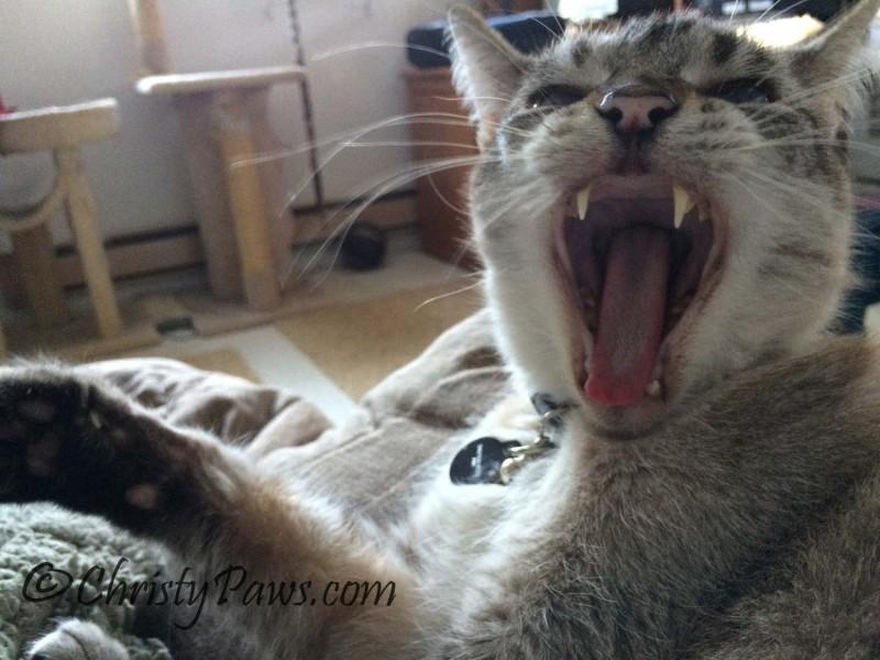 Wordless Wednesday: Yawns All Around Ocean 22215 132