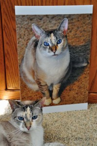 Flat me to be (for BlogPaws Nashville) and me