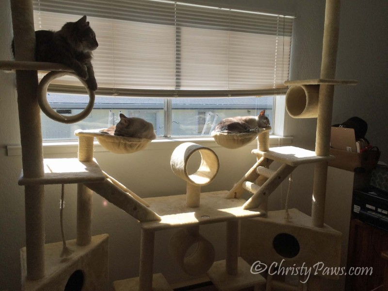 We are not Spoiled Cats! - Christy Paws