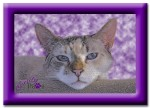 Caturday Art: Purple Clouds