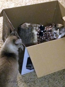 Who's in the Box? - International Box Day 5