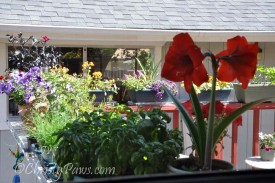 Deck-Flowers-158-10