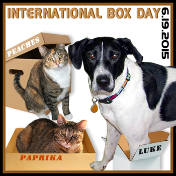 International Box Day-2015-BADGE-350x350