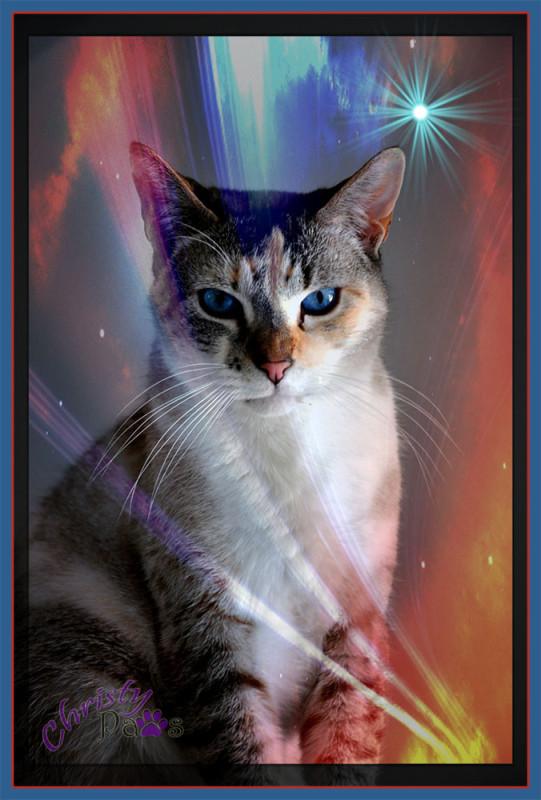Caturday Art: